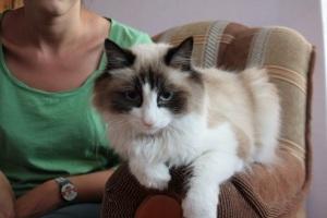 El gato de nuestro anfitrión de Couchsurfer