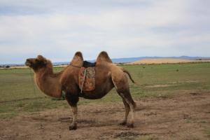Nuestro medio de transporte por las dunas