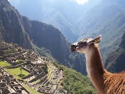 Llama en las ruinas de Machu Picchu