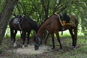 caballos descansando para la batalla