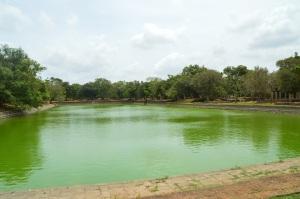 La piscina de los elefantes