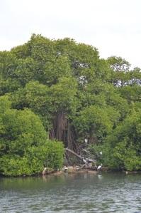 Laguna en Negombo
