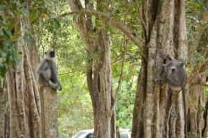 Mira un mono, mira otro, mira otro, mira... vale están por todos lados