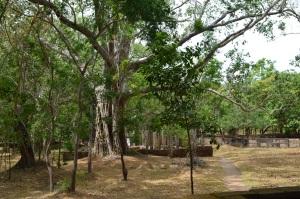 Ruinas en Anuradhapura