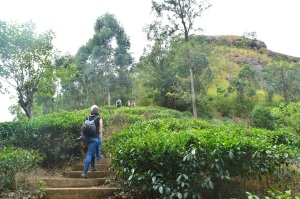 Subiendo al pequeño pico de Adan