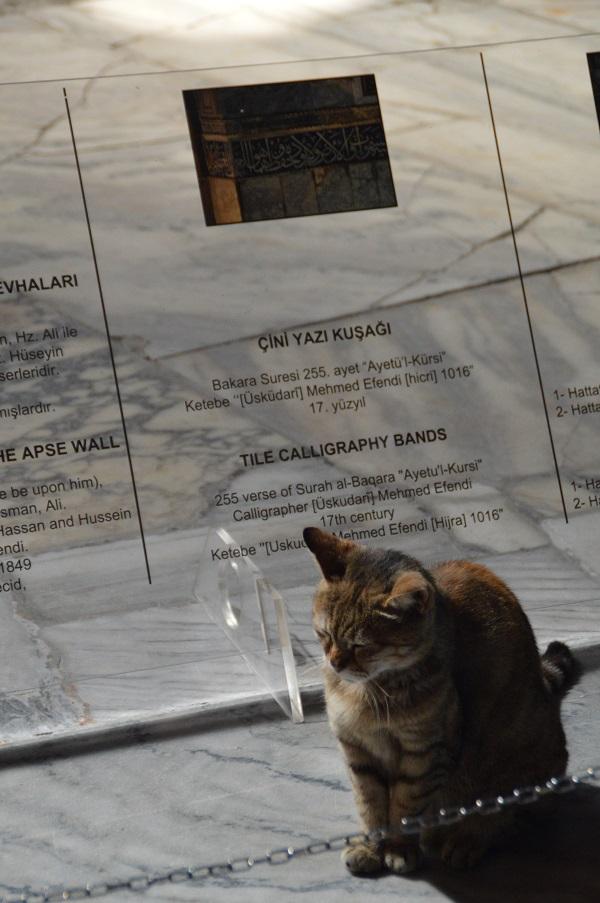 Un gato bizantino in Hagia Sofia? - Byzantine cat in Hagia Sofia?