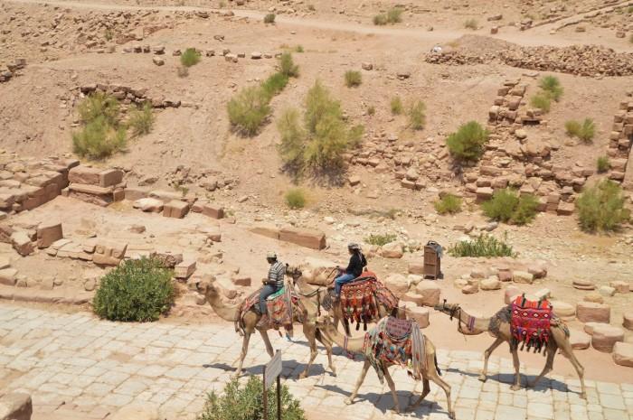 Señor un camello - Camel sir